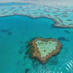 Путешествие по коралловому рифу